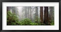 Framed Trees in Misty Forest