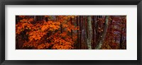 Framed Trees in Forest, Great Smoky Mountains National Park, North Carolina