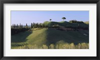 Framed Trees on Rolling Green Hills, Tuscany, Italy