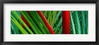 Framed Detail of Palm Leaves, Hawaii Islands