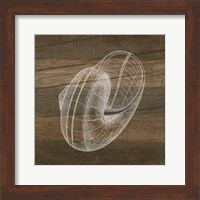 Framed Rustic Nautilus - White