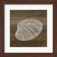 Framed Rustic Shell - White