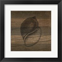 Framed Rustic Conch