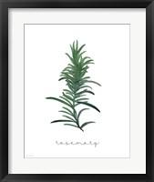 Framed Rosemary on White