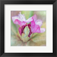 Framed Spring Budding