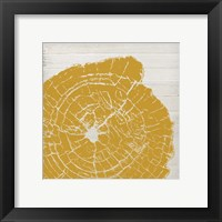 Framed Tree Rings I