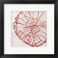 Framed Tree Rings II