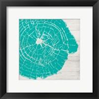 Framed Tree Rings IV