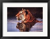 Framed Tiger Reflection