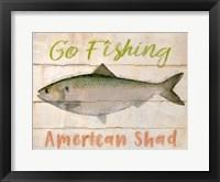 Framed American Shad