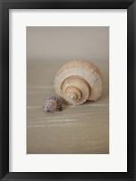 Framed Shells on Beige III