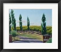 Framed VaPiano Vineyard