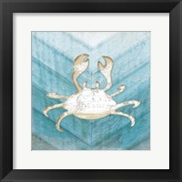 Framed Coastal Crab
