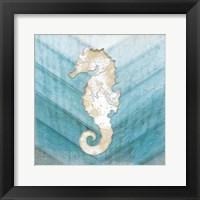 Framed Coastal Seahorse