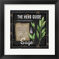 Herb Guide Sage Framed Print