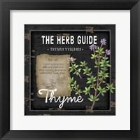 Herb Guide Thyme Framed Print
