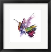 Framed Colorful Hummingbird