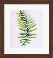 Framed Blue Fern