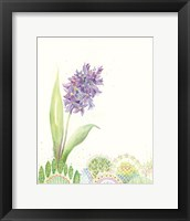 Framed Hello Hyacinth