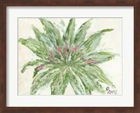 Framed Succulent No. 1