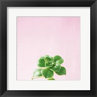 Framed Succulent Simplicity VII on Pink