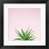 Framed Succulent Simplicity I on Pink