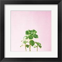 Framed Succulent Simplicity IX on Pink