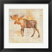 Framed Moose Study