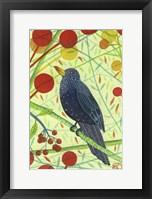 Framed Blackbird 2