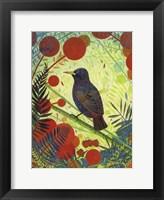 Framed Starling