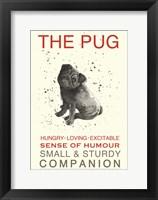 Framed Black Pug
