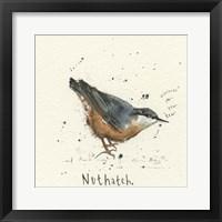 Framed Nuthatch