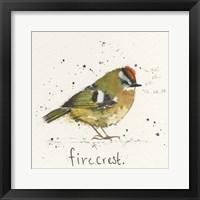 Framed Firecrest