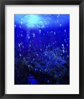 Framed Underwater