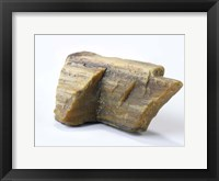 Framed Petrified Wood
