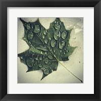 Framed Maple Drops