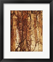 Framed Firewood