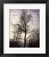 Framed Tree In November