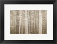 Framed Forest Mist