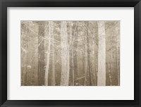 Framed Forest Mist