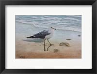 Framed 1 Seagull