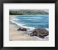 Framed 2 Turtles