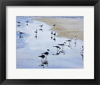 Framed Many Birds