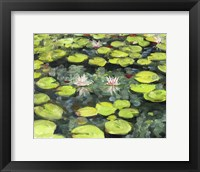 Framed Lilly Pond