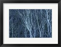 Framed Birch 2