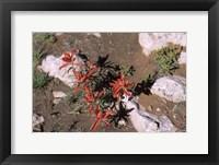Framed Desert Flower 1