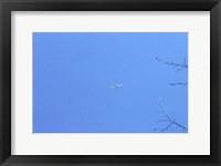 Framed Flying High 1