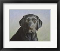 Framed Black Labrador Retriever