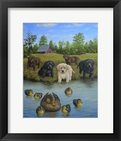 Framed Puppies And Ducklings