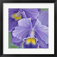 Framed Orchid Series 3